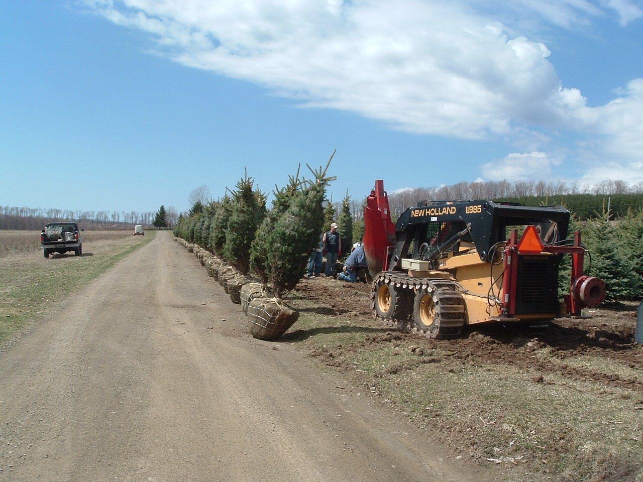 Our crew preparing landscape trees for shipment